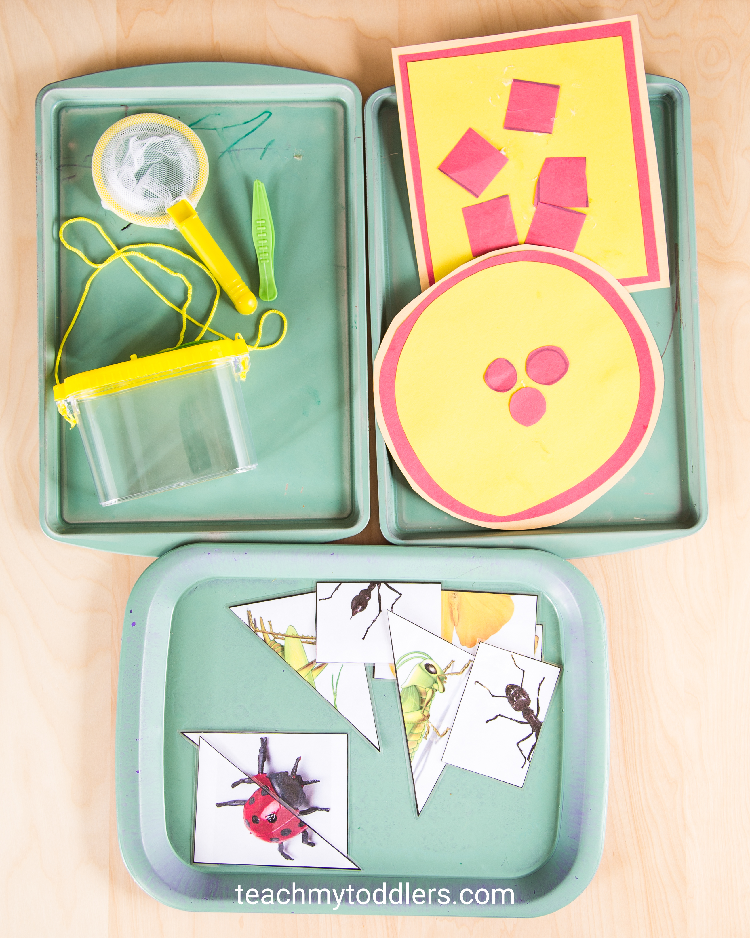 Find out how to use these bug trays to teach your toddlers about bugs